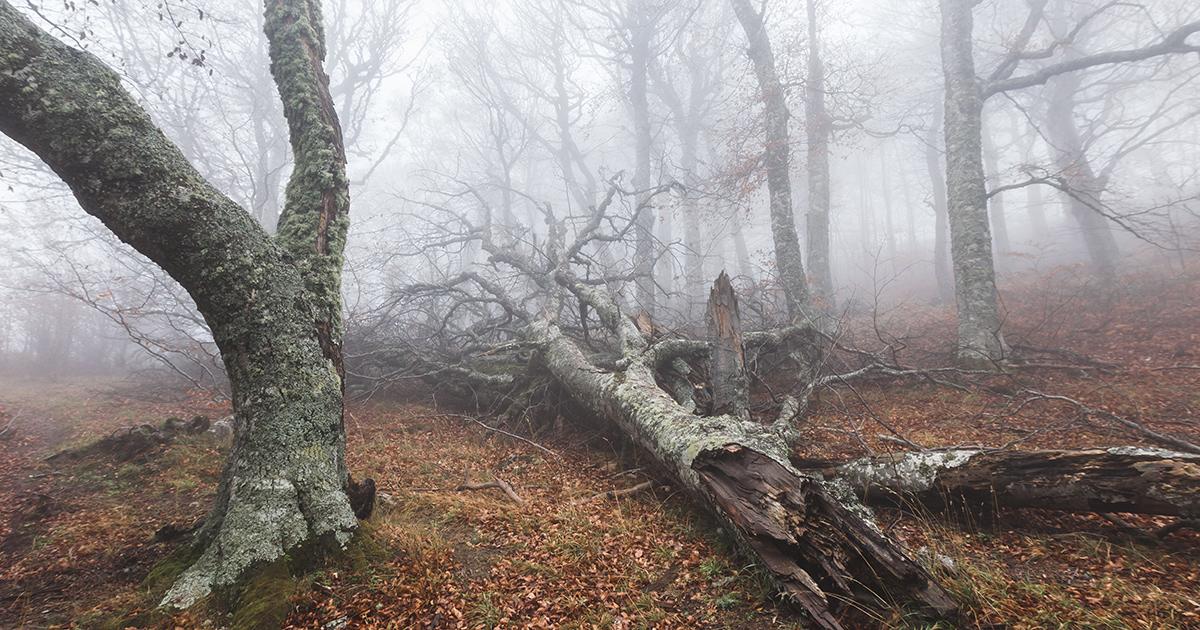 Bild morscher Bäume im Wald im Nebel als Sinnbild von Depression und düsteren Gedanken